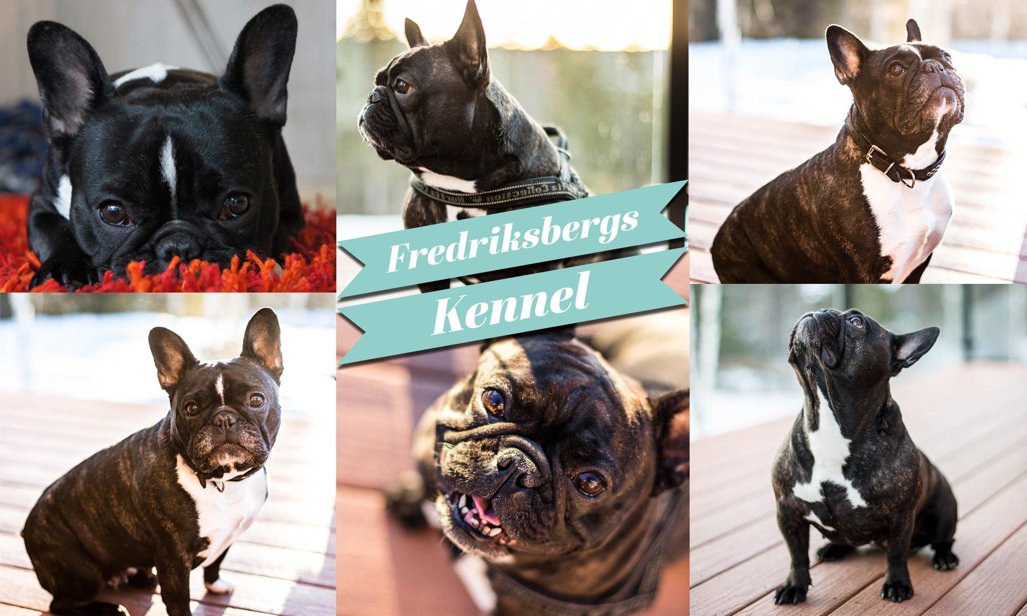Fredriksbergs Kennel